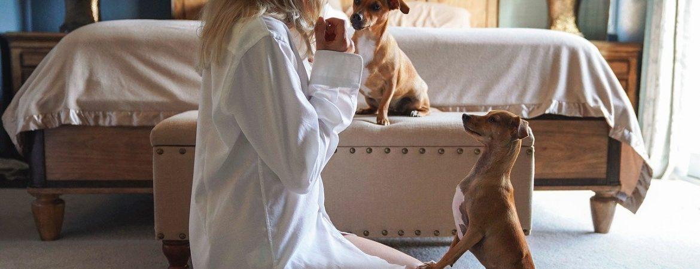 cane-educato-casa